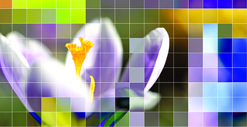 Pixelated crocus flower